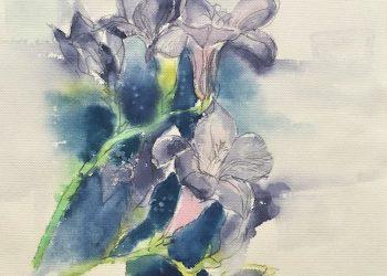 natura-fioletowe-frezje