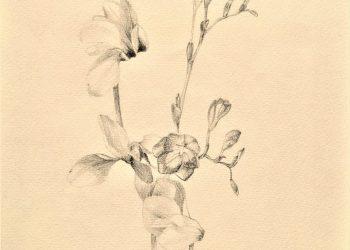 natura-fiolki