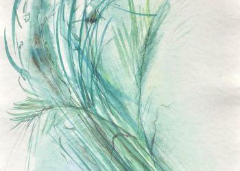 natura-trawy