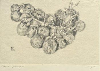 natura-winogrono