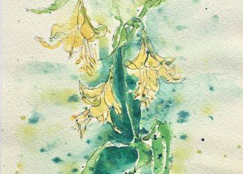 natura-zolte dzwoneczki